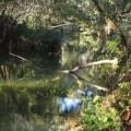 Rivière à Salernes